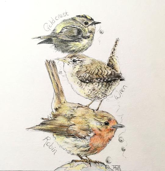 Three Little Birds - Robin, Wren and Goldcrest
